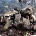 Galapagos Islands Nature Tours