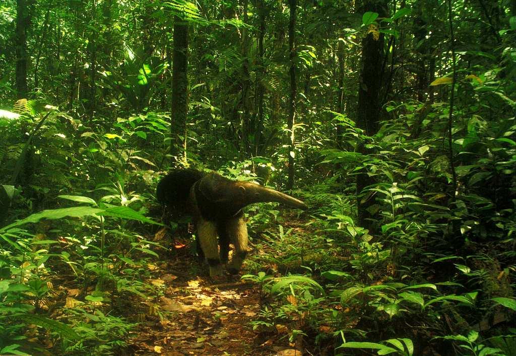 Ecuador National Parks
